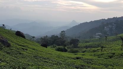 Parakkat Nature Tea