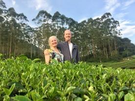 In the tea plantation.