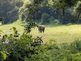Elephant on our way to Polonnaruwa