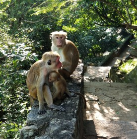 Monkeys along the steps