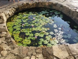 Lovely lotus pond outside the temples