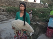 One of the sheep with one of our hosts.